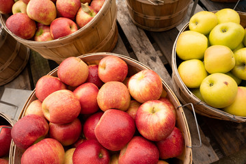 Apples Fresh Picked in a Bushel BASKET fresh food produce