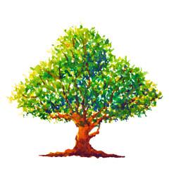 oak tree watercolor painting illustration design hand drawing