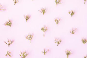 Little pink flower pattern on pink background