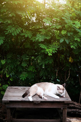 Siamese cat and grey Cat relax with natural light in The garden