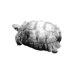 Turtle. Isolated on white background. Vector illustration.