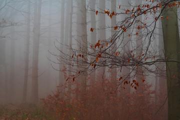 foggy forest - Nebel im Wald