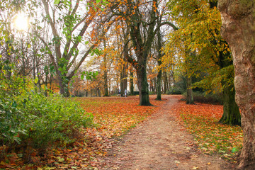 Boys jogging in fall park