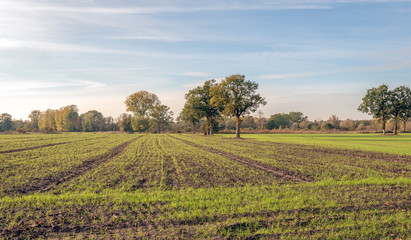 Panoramic image of a landscape with rows of freshly sown grass in a large field with corn stubble