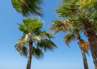 palm trees on clear blue sky background. Travel concept background.