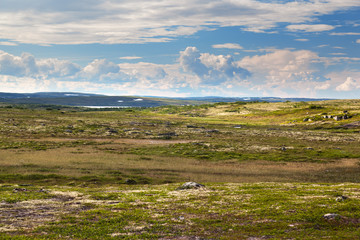 Tundra landscape in the north of Russia