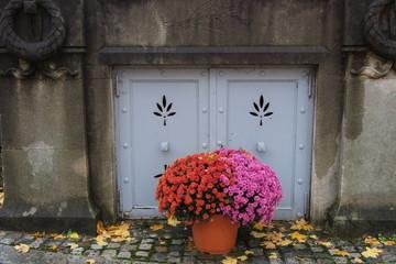 Chrysanthèmes roses et mauves au cimetière