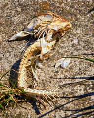 Skeleton of fish bones on the beach.