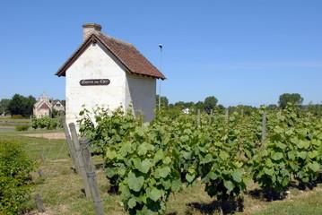 Ville de Noyers-sur-Cher, région viticole, cabane entourée de vignes, département du Loir-et-Cher, France Wall mural