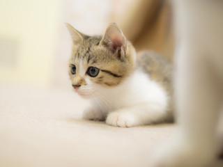 獲物を狙う子猫