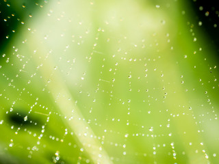Water Drops Perched on Web