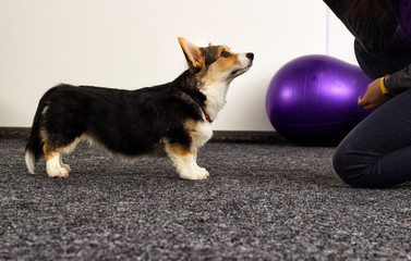 puppy at a fitness class