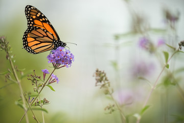 Butterfly on a lilac flower. Gentle artistic photo.