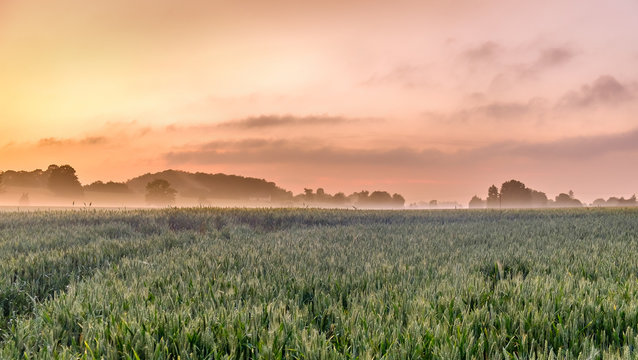 Sunset over a rye field in the Orne countryside in summer, Normandy France