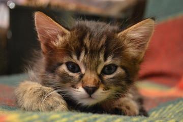 Photo kitten