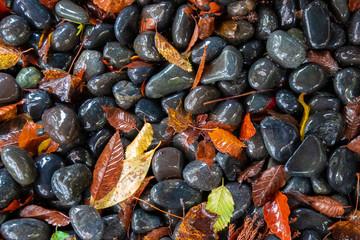 Wet gravel and fallen leaves