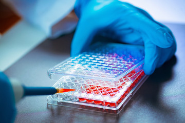 Biotechnology. Laboratory technician working with cell culture