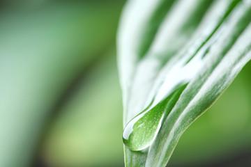 Macro view of water drop on green leaf
