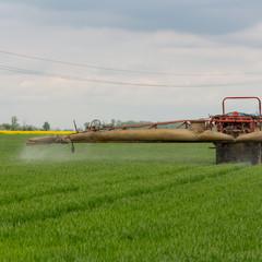chemical treatment wheat spraying mushroom killing chemicals