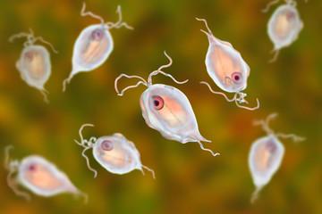 Pentatrichomonas hominis protozoan