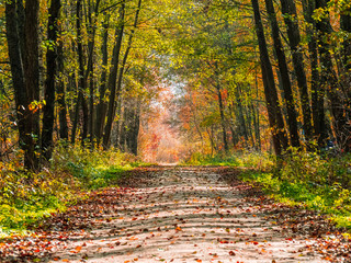 autumn or fall country road  in the forest with sunflare or sunrays