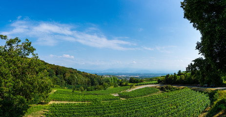 Germany, XXL panorama of wine production at Kaiserstuhl Wall mural