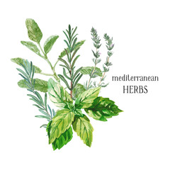 Watercolor illustration. A bunch of fresh culinary and medicinal herbs. Floral design for wedding invitations, greeting cards, prints, postcards, social media posts. Sage, rosemary, thyme, basil.
