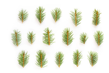 Pattern of fir tree branches on white background