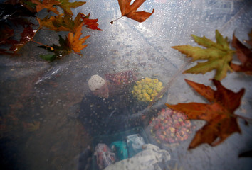 A roadside vendor selling apples is seen through a plastic sheet that he uses to cover himself from rain, in Srinagar