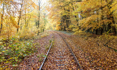 Old and forgotten railway tracks in a colorful autumn forest. For background.