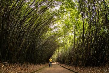 tunel de Bambu