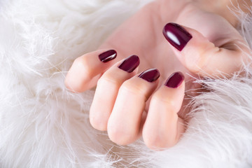 Girl hand with red wine color nails gel polish on finger nails, hands in white fur background. Winter manicure and beauty concept. Close up, selective focus