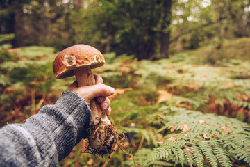 personal perspective of person picking tasty porcini mushroom
