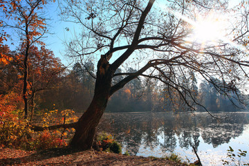 beautiful autumn landscape with lake