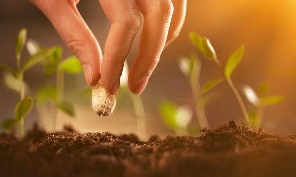 Farmer's hand planting seed in soil