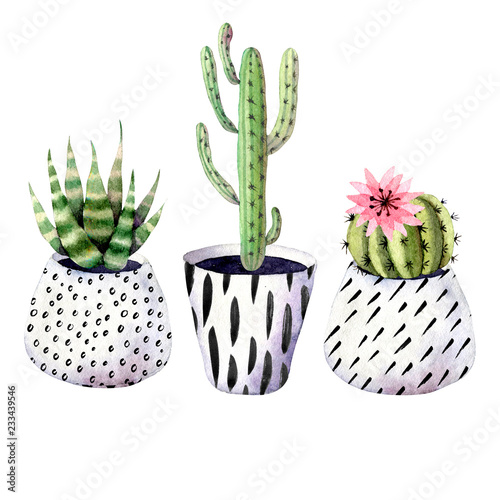 Set Watercolor Hand Drawn Illustration With Cactus And Succulents