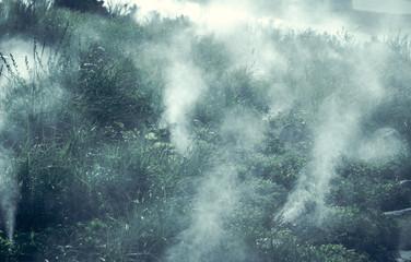 Misty forest in Norway - spooky mist landscape.