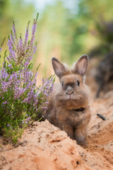 Little rabbit on the walk in the forest