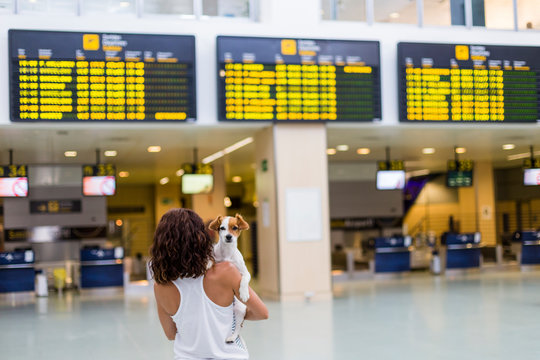 traveler woman and her dog at the airport. information screens background. travel and transportation with technology concept.