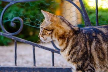 Profile de joli chat tigré dans la rue.