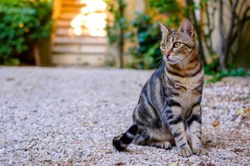 Joli chat tigré dans la rue, coucher de soleil.