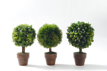 Small green plants on white background copyspace