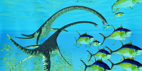 Aquatic Reptile Elasmosaurus - Yellowfin tuna try to escape the jaws of two Elasmosaurus marine reptiles during the Cretaceous Period of North America.