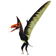 Dsungaripterus Pterosaur Standing - Dsungaripterus was a Pterosaur raptor bird that lived in China during the Cretaceous Period.