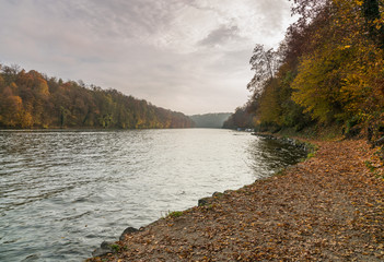 Wall Mural - Rhine river and riverside with fall color foliage and forest under a cloudy sky