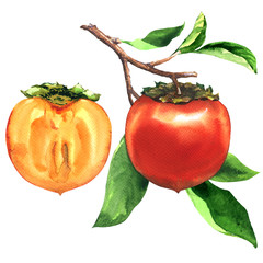 Branch of ripe persimmons with leaves and sice, half of fresh persimmon isolated, hand drawn watercolor illustration on white background