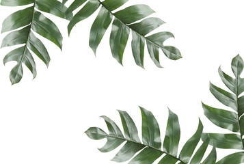 Background of Tropical Leaves with copy space