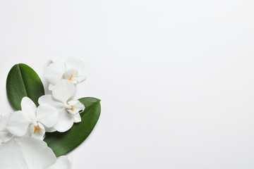 Beautiful orchid flowers with leaves on white background, top view. Tropical plant