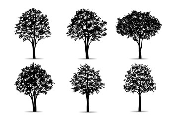 Set of tree silhouettes isolated on white background for landscape design and architectural compositions with backgrounds. Vector.