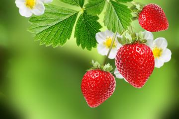 ripe red berries garden strawberry